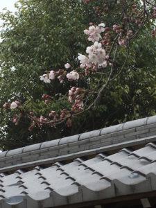 sakuramonn